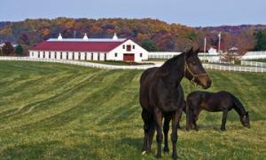 Sagamore_farm_equestrian